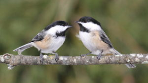 Birding Walks