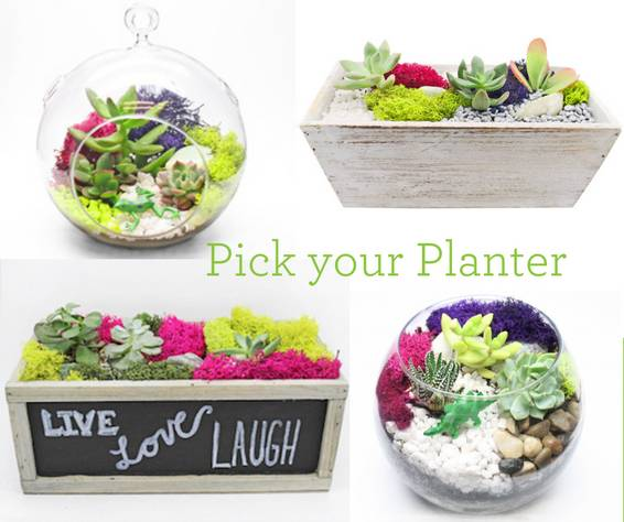 Plant Nite - Pick Your Planter with glass or wood